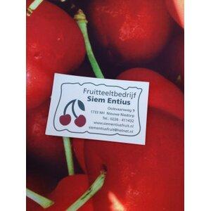 Fruitteeltbedrijf Siem Entius logo