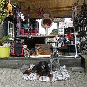 Hond en Kat aan de Zaan image 3