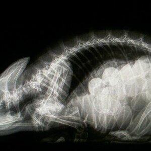 Dierenkliniek Muggenburg image 6