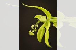 Indische Pracht – Bloemen van de VOC van Dennis A-Tjak