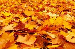 Kom speuren naar herfstcadeautjes!