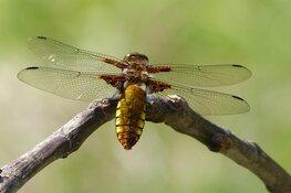 Foto Expo Libellen en Vlinders bij MAK Blokweer