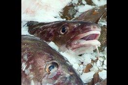Zeeverse Vismarkt op zaterdag 13 juli 2019