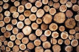 Burgerinitiatief bomenkap Westerdijk door naar college