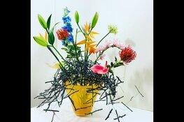 Laat je steeds opnieuw verrassen bij Blooms