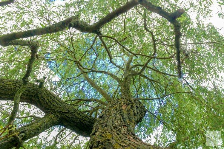 De verrassende eigenaardigheden van bomen
