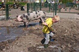 Word dierenverzorger voor een dag!