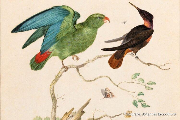 Nieuwe aanwinst Westfries Museum: kleurrijke gouache van Johannes Bronckhorst