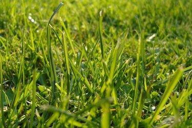 Waarom maait de gemeente niet al het gras en waarom duurt het soms lang?