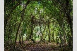 Foto-expositie 'Bomen' door Mieke Brouwer