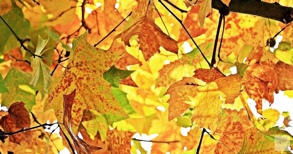 Herfst doet officieel intrede, maar heftige regenbuien blijven nog even achterwege